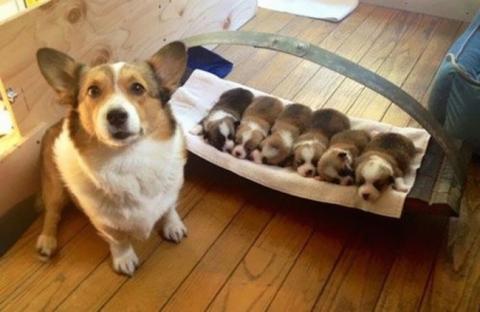 Собаки-мами, які безмірно пишаються своїм потомством (20 фото) (8)