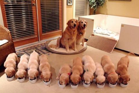 Собаки-мами, які безмірно пишаються своїм потомством (20 фото) (7)