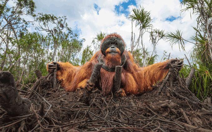 Эти снимки захватывают дух - на престижном конкурсе выбрали лучшие фото дикой природы 2020 года