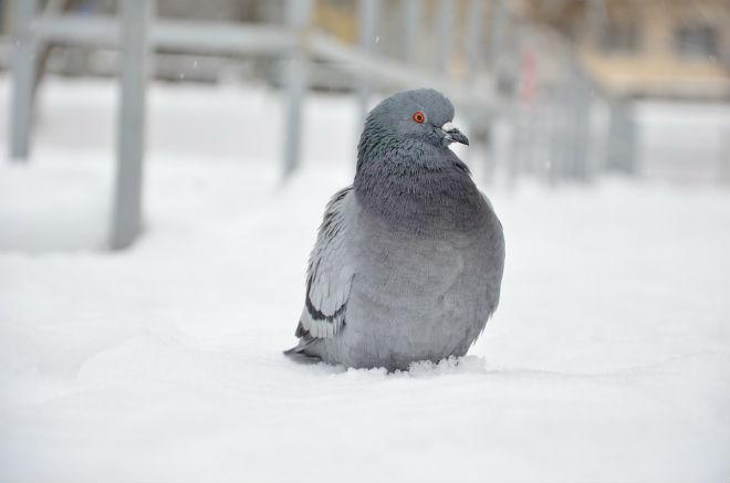 Погода на сегодня: в Украине местами ожидается снег, температура от -3 до -10