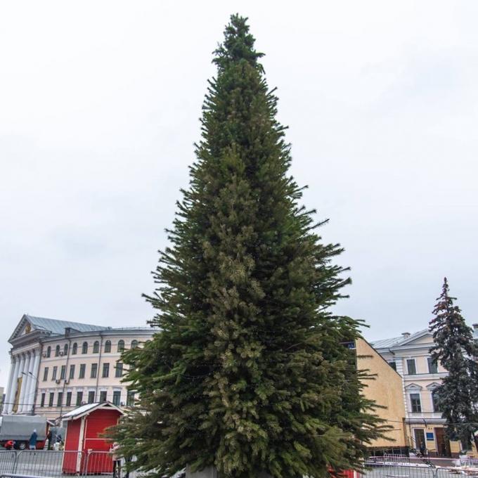 В Киеве уже установлена главная елка страны 2019: новые зрелищные фото (6)