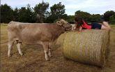 Девушка из Новой Зеландии, которая ездит верхом на корове, покоряет соцсети: появились фото и видео