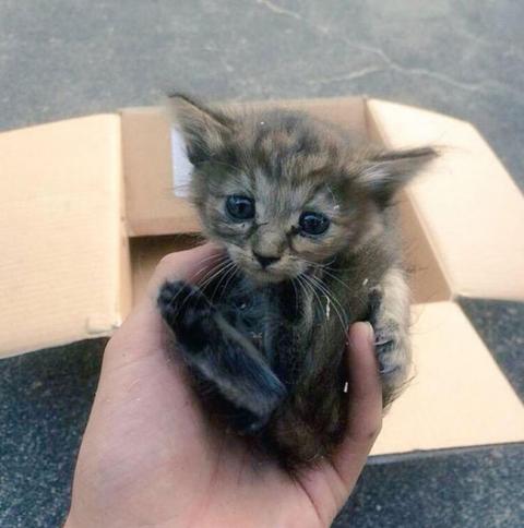 Представляємо кошеня, яке вважає себе тхором (12 фото) (1)