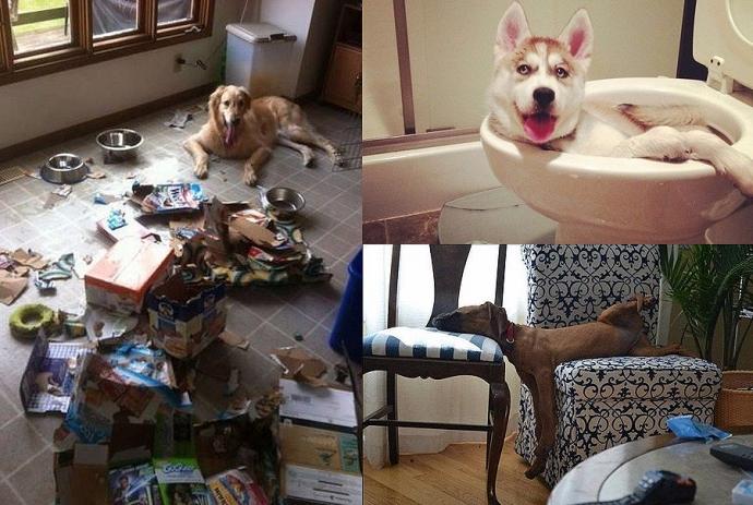 Как развлекаются псы, когда хозяев нет дома (10 фото)
