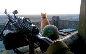 Россия обижает котиков: сеть взбудоражило умилительное фото с Донбасса