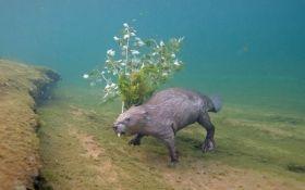 Фотограф 4 года караулил редкого бобра под водой, чтобы сделать снимок