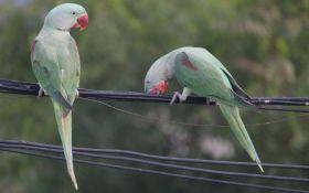 Доисторическая птица удивила ученых: появились первые изображения