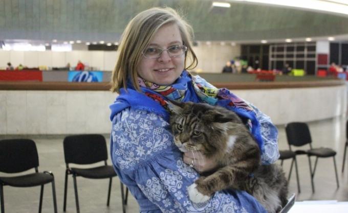 Битва гигантов: в Киеве выбрали самого большого кота (2)