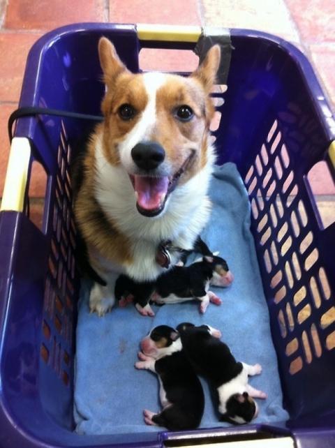 Собаки-мами, які безмірно пишаються своїм потомством (20 фото) (14)