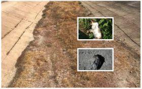 Из-за экологической катастрофы в Крыму начали гибнуть животные и вымирать растения: появились ужасные фото