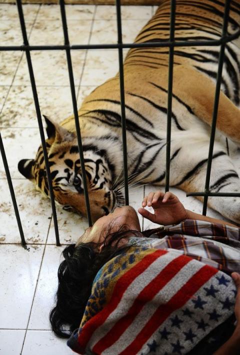 Неймовірна історія дружби тигра і людини (13 фото) (8)