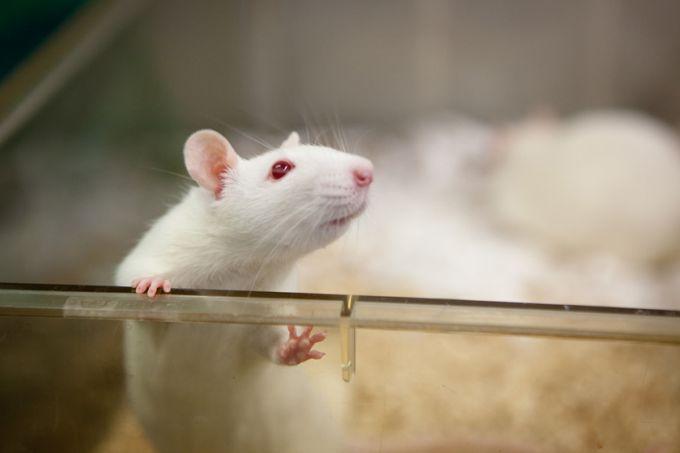 Генная модификация лечит животных от ВИЧ - ученые