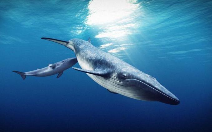 Учёные рассказали, что киты стали гигантами внедалеком прошлом