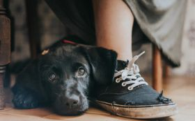 На престижном конкурсе выбрали лучшие фото собак 2018: трогательные кадры