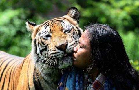 Неймовірна історія дружби тигра і людини (13 фото) (9)