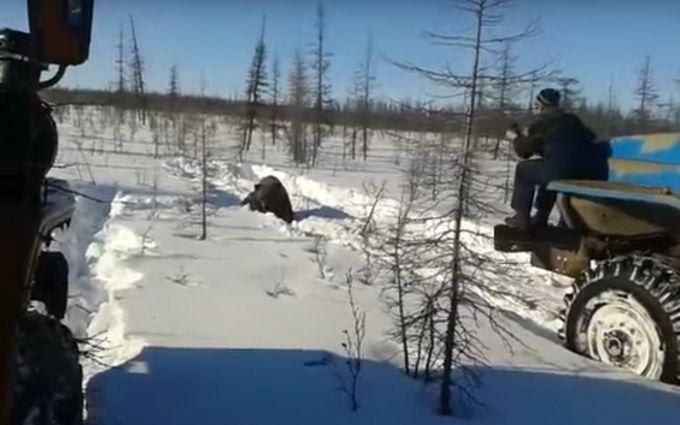 Милиция проверяет видео сдавившими медведя вахтовиками вЯкутии