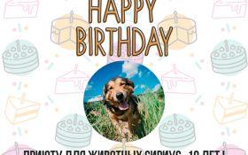 Поздравь хвостиков: самый большой приют для животных в Украине празднует день рождения