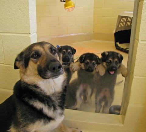 Собаки-мами, які безмірно пишаються своїм потомством (20 фото) (12)