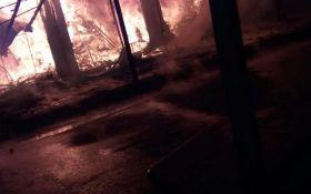 На популярному курорті України сталася велика пожежа: опубліковані фото і відео