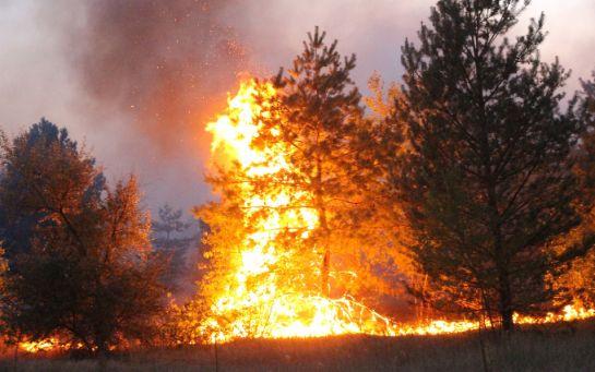 Навмисний підпал - штаб ООС шокував новинами про нищівні пожежі