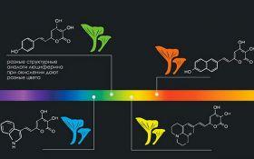 Вчені створили гриби, що світяться майже всіма кольорами веселки