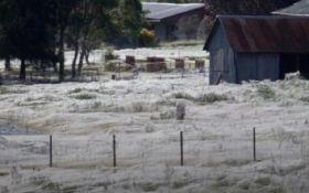 В Новой Зеландии поле застелило гигантской паутиной