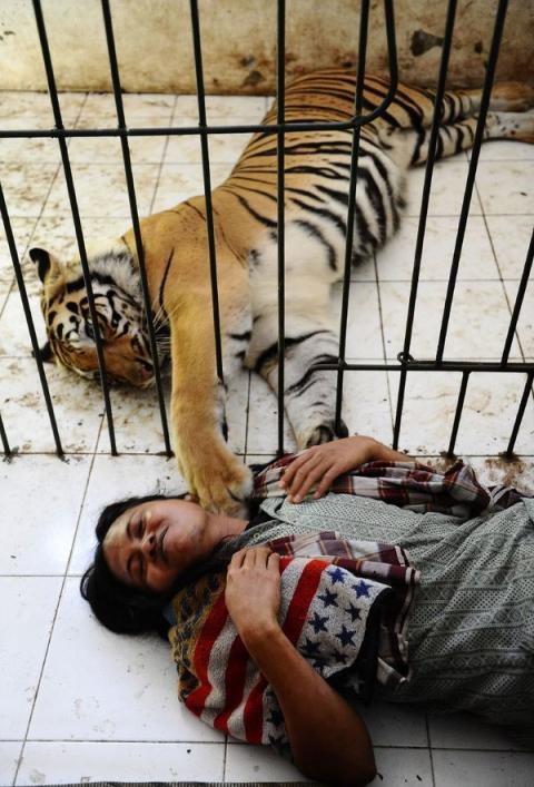 Неймовірна історія дружби тигра і людини (13 фото) (2)