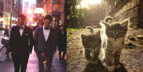 Коты как мужчины (21 фото) (15)