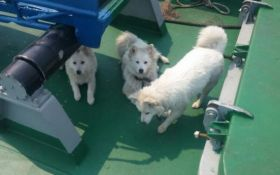Гуманність у всій красі: в порт РФ не пускають судно з цуценятами врятованої у відкритому морі собаки