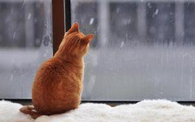 Мокрий сніг та ожеледиця: синоптики зробили прогноз погоди на початок тижня