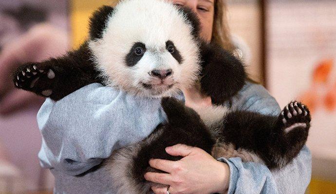 Посетителям зоопарка в Вашингтоне показали панду Бей-бей