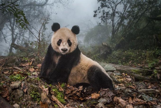 Эти снимки захватывают дух - на престижном конкурсе выбрали лучшие фото дикой природы 2020 года (10)