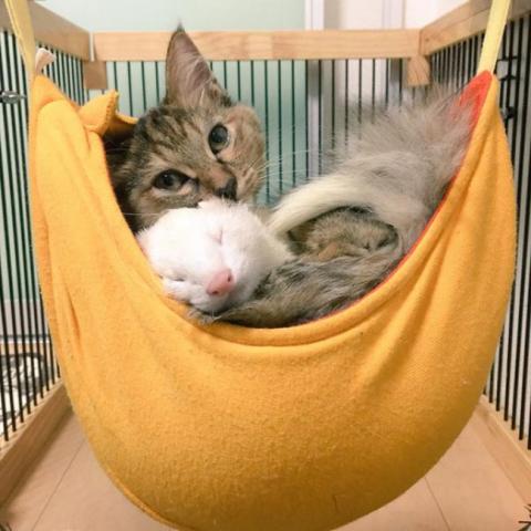 Представляємо кошеня, яке вважає себе тхором (12 фото) (12)