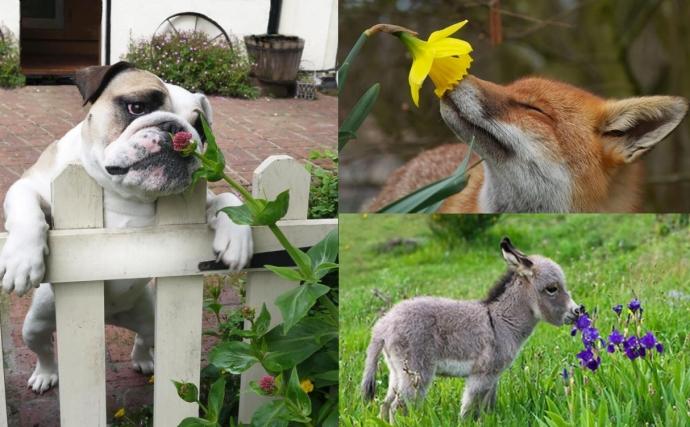 Подборка животных, которые наслаждаются запахами цветов (15 фото)