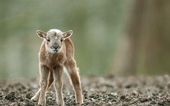 WWF-Україна нагадав, чому не можна чіпати дитинчат диких тварин
