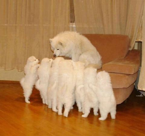 Собаки-мами, які безмірно пишаються своїм потомством (20 фото) (9)