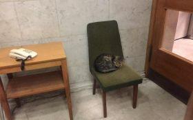 """Будет защищать от русокрыс: МИД Украины """"трудоустроило"""" кота"""