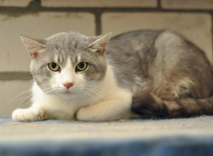 Найди друга: пушистые котики ждут любящих хозяев (1)