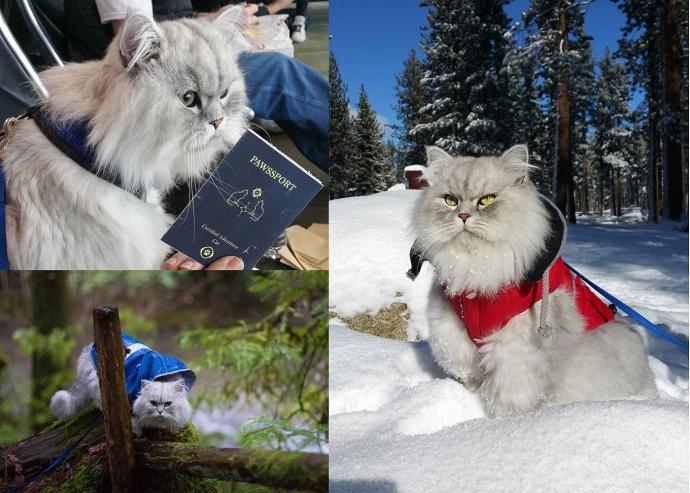 Кот-путешественник Гендальф стал новым любимцем пользователей Instagram (9 фото)