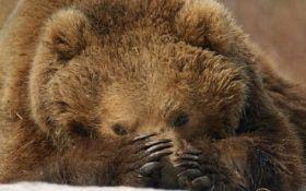 У Білій Церкві в цирку ведмідь напав на глядачів: з'явилося відео
