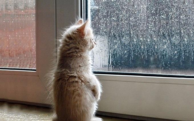 Погода в Украине 25 февраля: небольшой дождь с мокрым снегом, температура днем до +9
