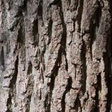 Дерев'яні