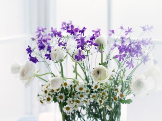 фото квіти на робочий стіл