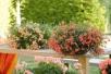 Ампельные растения длядома