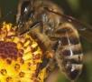 Подкормка пчел иих заболеваемость