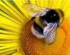 Пчеловод делится опытом (2часть)