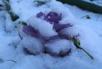 Снежный ларь длякочанов