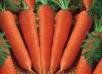 Керосин—  помощник моркови