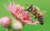 Опыт пчеловода изВолгограда