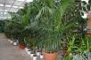Уход закомнатными растениями